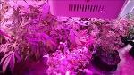 led_grow_light_yxi